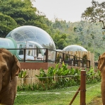 These 'Jungle Bubble' Suites in Thailand Let You Sleep Among the Elephants